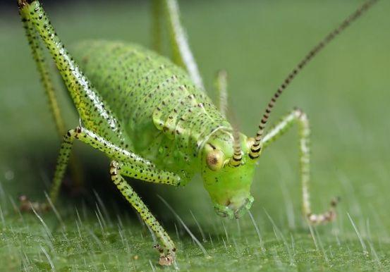 cırcır böceği ilaçlama